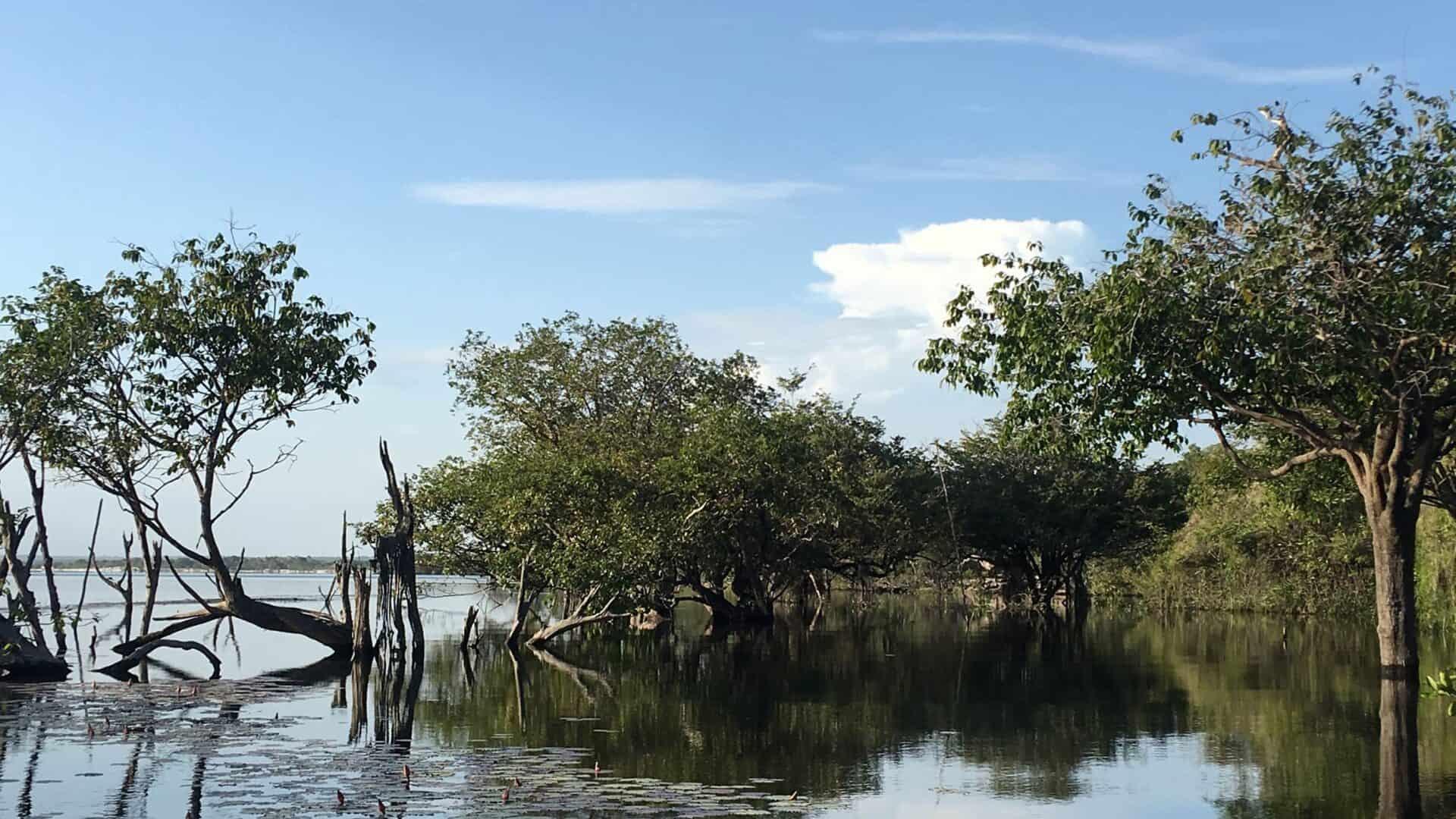 Paisagem de árvores imersas em rio, na Amazônia paraense