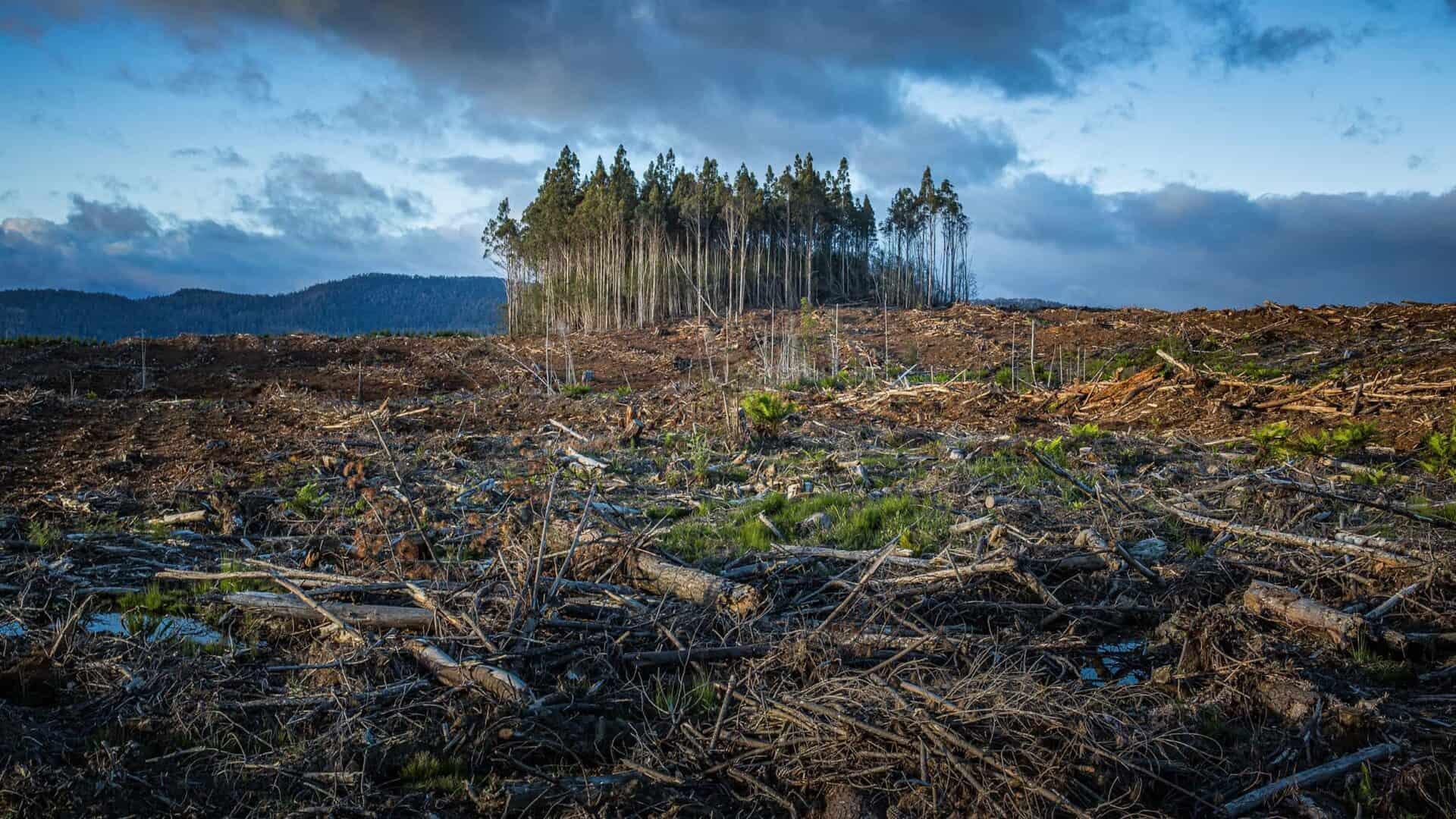 Horizonte de floresta desmatada, com poucas árvores restantes e céu nublado