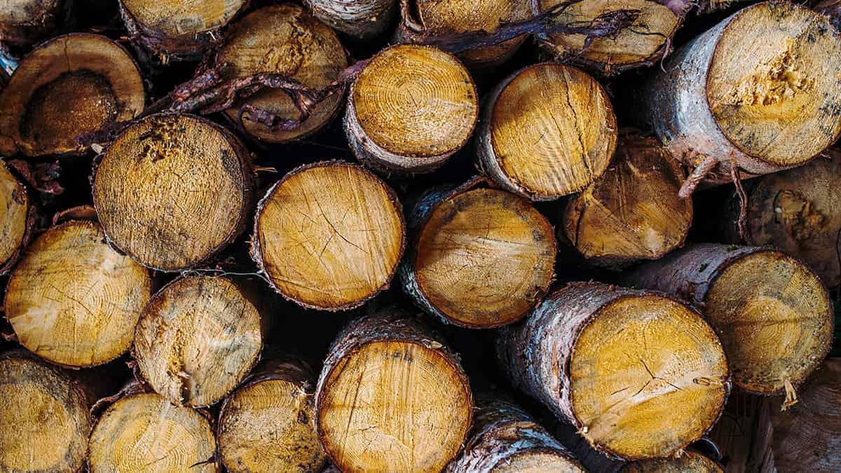 Toncos de madeira empilhados