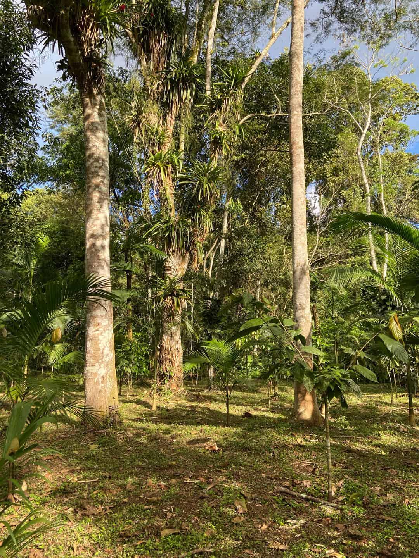 Agroflorestas pela Regeneração da Terra