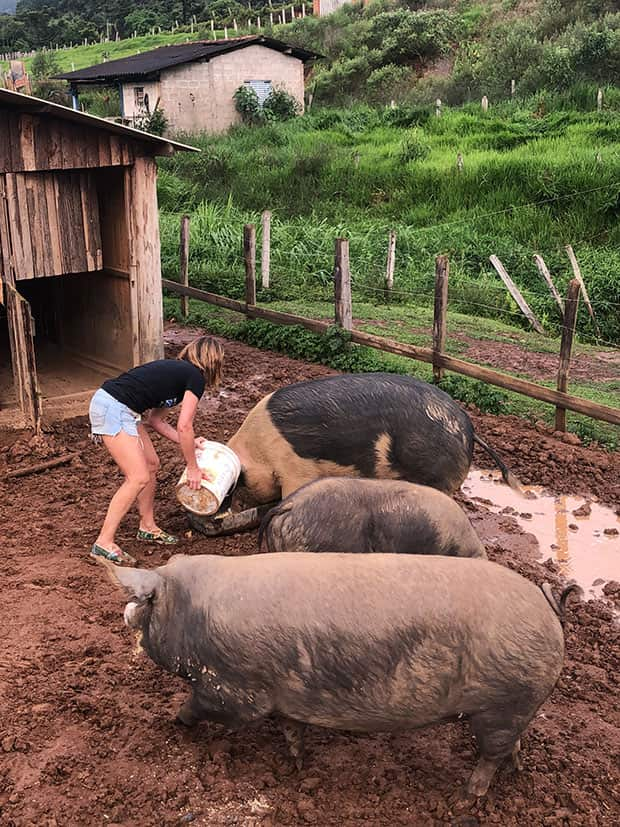 Menina trabalhando como voluntária, alimentando porcos no Santuário de Animais Vale da Rainha