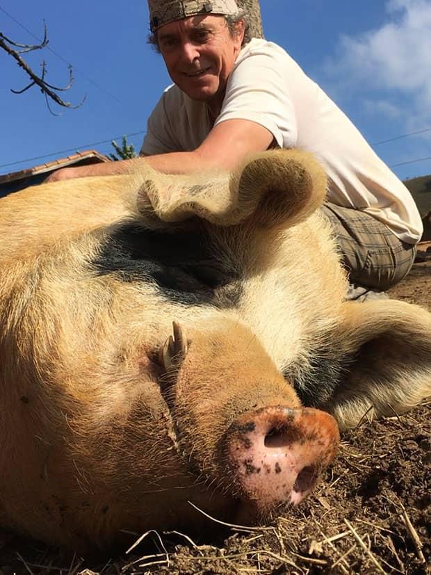 Vitor favano faz carinho em porco, no Santuário de Animais Vale da Rainha