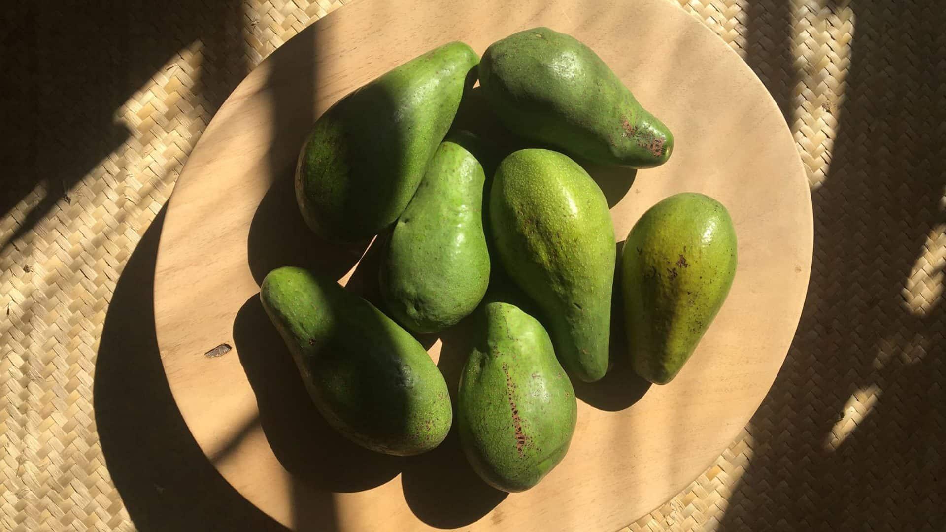 Abacates em fruteira de madeira