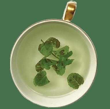 xícara de chá de hortelã